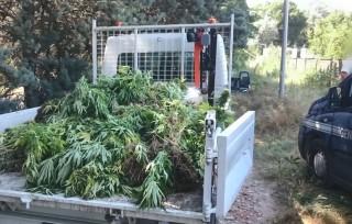 Preview of Les cultures clandestines de Cannabis