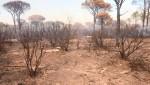 Affiche de Incendie dans le Var : un désastre pour la biodiversité